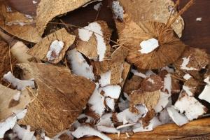Coconut7